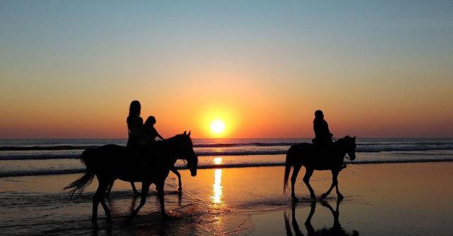 Balades à cheval dans la nature à Contis
