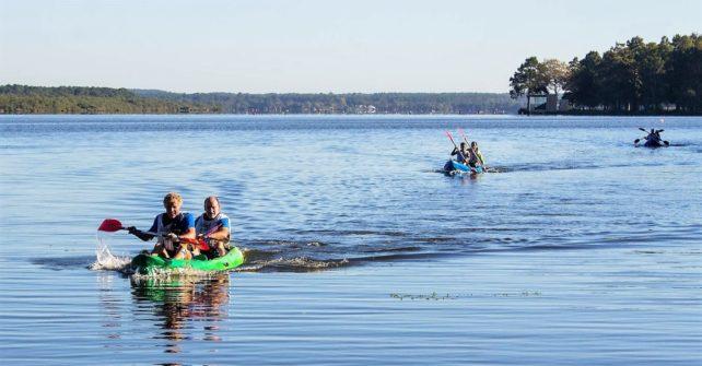 La forêt des Landes : pour se ressourcer et faire le plein d'activités